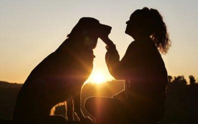 2-Tages Intensivseminar Tierkommunikation